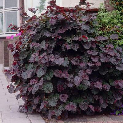 Rastliny obľubujúce tieň